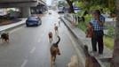 Belediyelerin başı boş köpek tartışması!