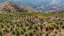 BOTAŞ'tan büyük ağaçlandırma çalışması