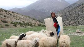 Afganistan'dan 5 bin lira maaşla çoban ithali
