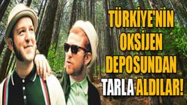 Türkiye'nin oksijen deposundan tarla aldılar!