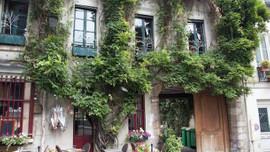Paris'te sokaklar bahçeye dönüyor!