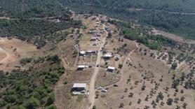 İmar barışı fırsatçıları koca ormanı katletti