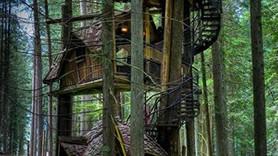 Hayallerin ötesinde ağaç evler!