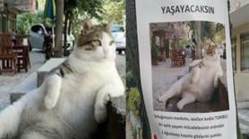Kadıköy'ün simgesi 'Tombili' kedinin anıtı yapılacak