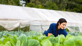Genç çiftçiye 483 milyon TL hibe