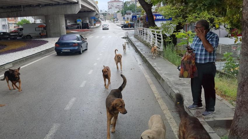 Belediyelerin sokak köpeği tartışması