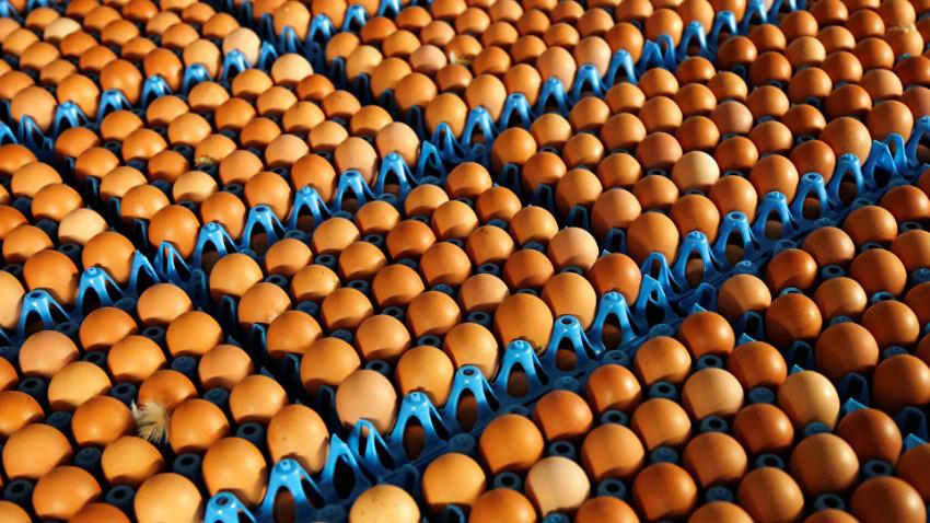 Türk yumurtası Afrika yolcusu
