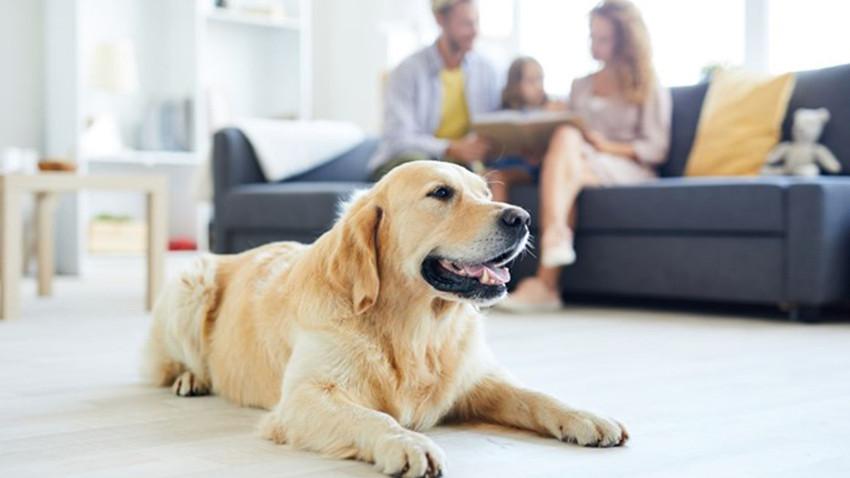 Apartmanda kedi, köpek beslemek yasak mı? Havlama için desibel ölçümü