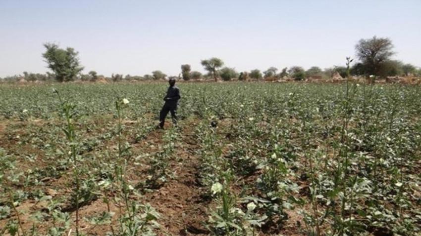 Artık tarım Afrika'da yapılacak